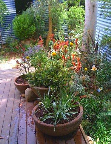 Understorey Garden Design - native garden design canberra